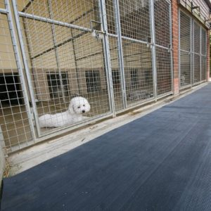 Ribbed black mat in a dog kennel corridor