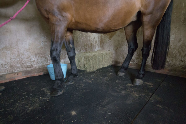 Horse standing on stable mat