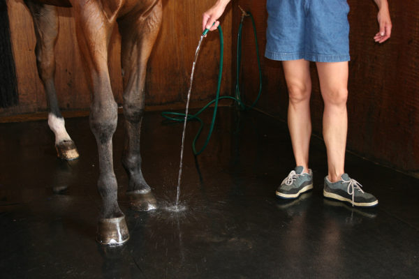 Person washing horse in stable stood on a Stable Mat